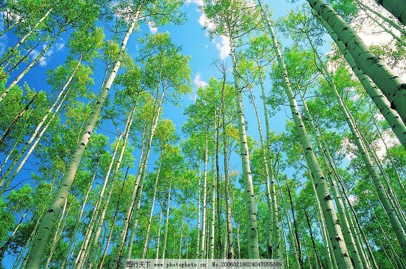 森林树木0062 自然风景