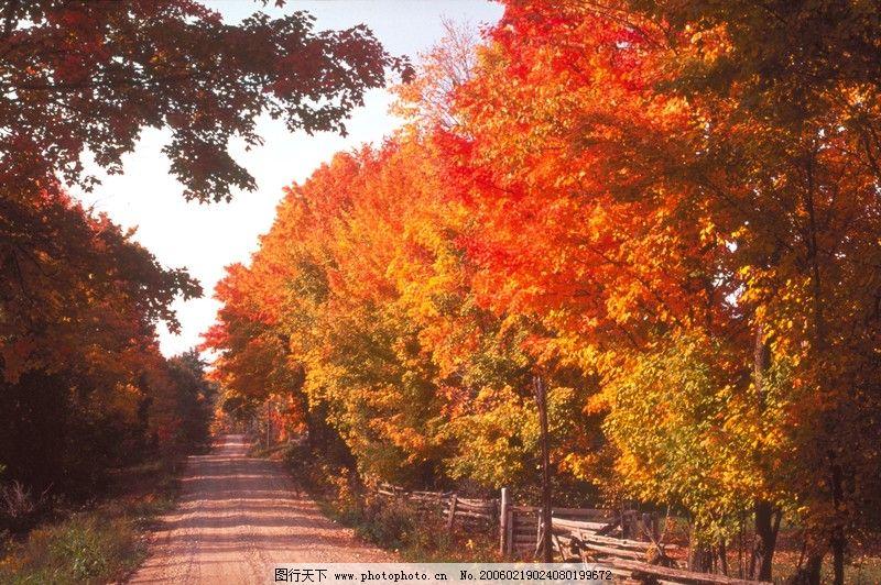 自然风景 秋天景色