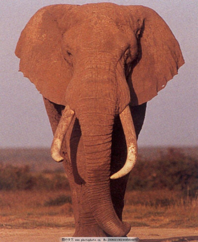 动物 大象王国