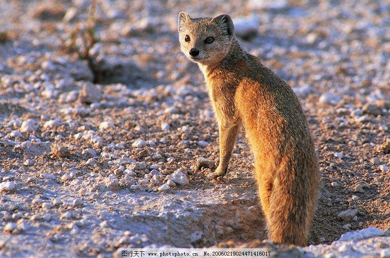 珍稀动物0006_野生动物_生物世界_图行天下图库