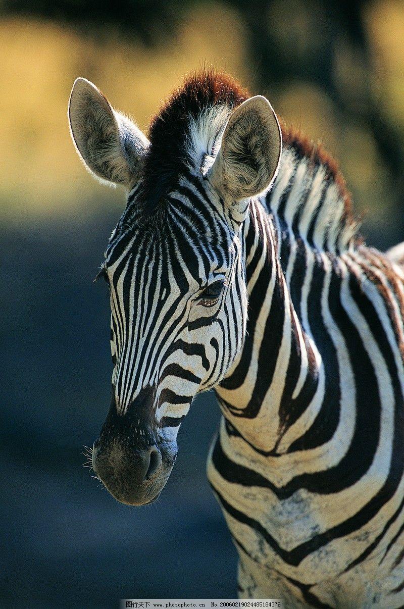 设计图库 生物世界 野生动物    上传: 2006-2-19 大小: 3.