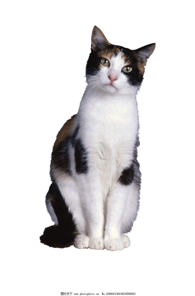 壁纸 动物 猫 猫咪 小猫 桌面 800_1211 竖版 竖屏 手机