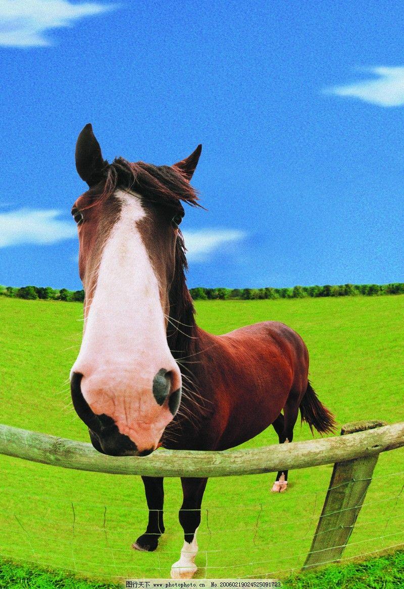 马的图片素材大全