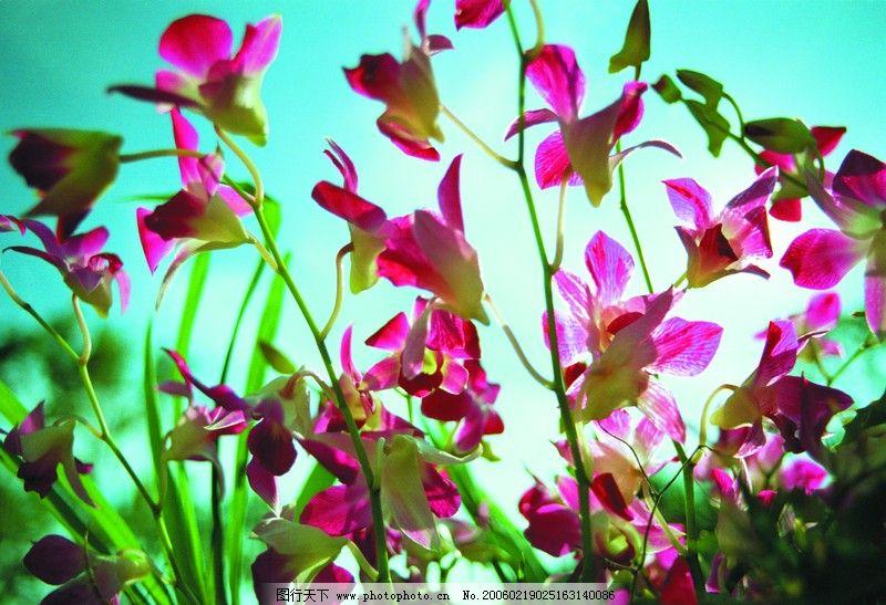 千花万卉0231 自然风景