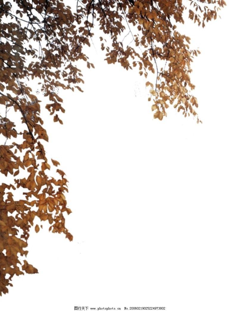 近景树0058 自然风景