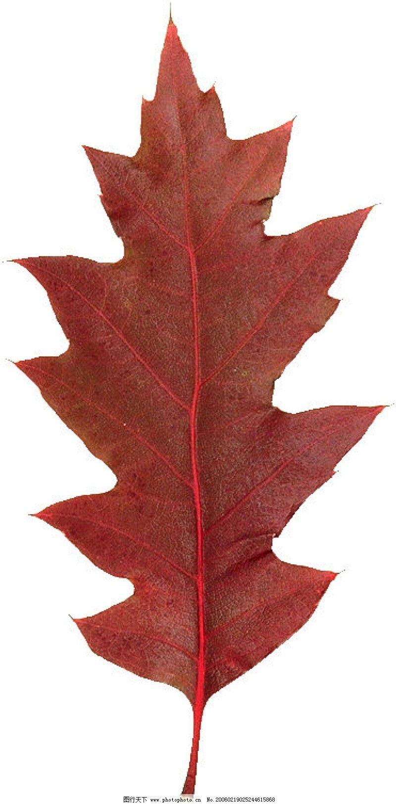 叶子细长的风景树图片