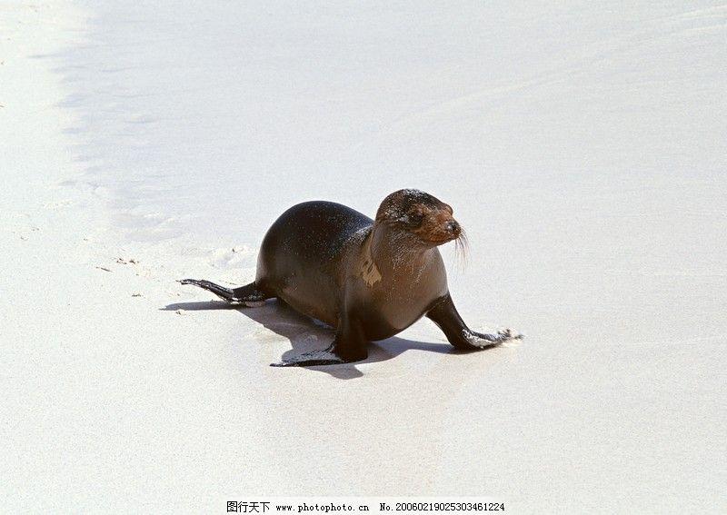 海狮冰雪熊0079_海洋生物_生物世界_图行天下图库