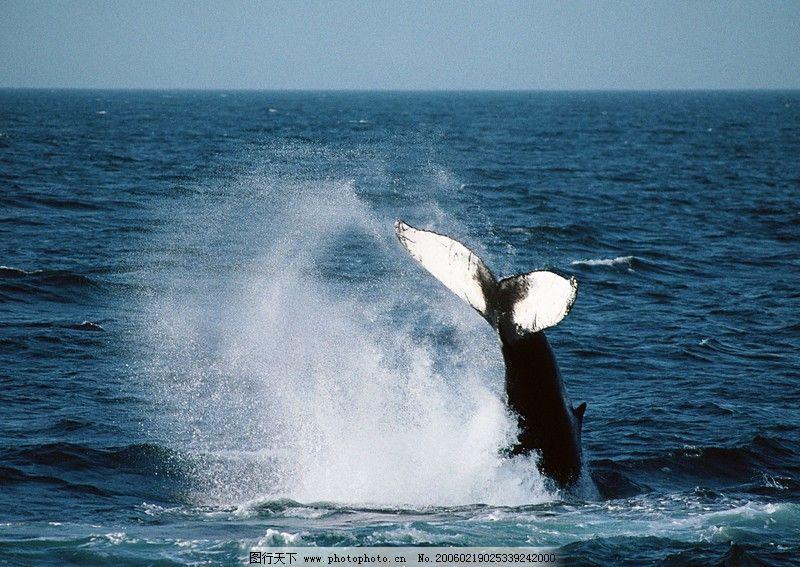 鲸鱼鲨鱼海豚0019