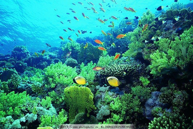 动物 水底天堂