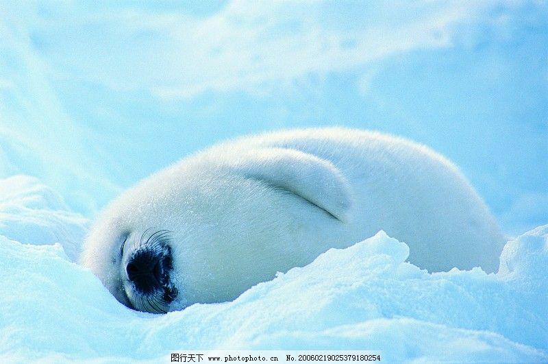 海狮冰雪熊0029_海洋生物_生物世界_图行天下图库