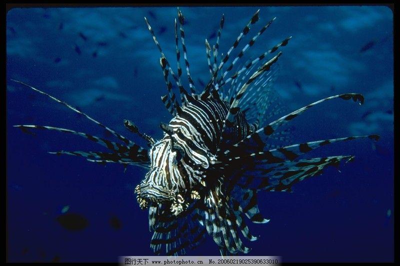 动物 海底世界