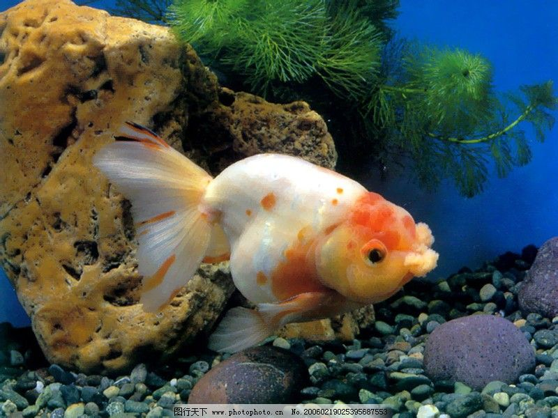 海底世界0007 动物