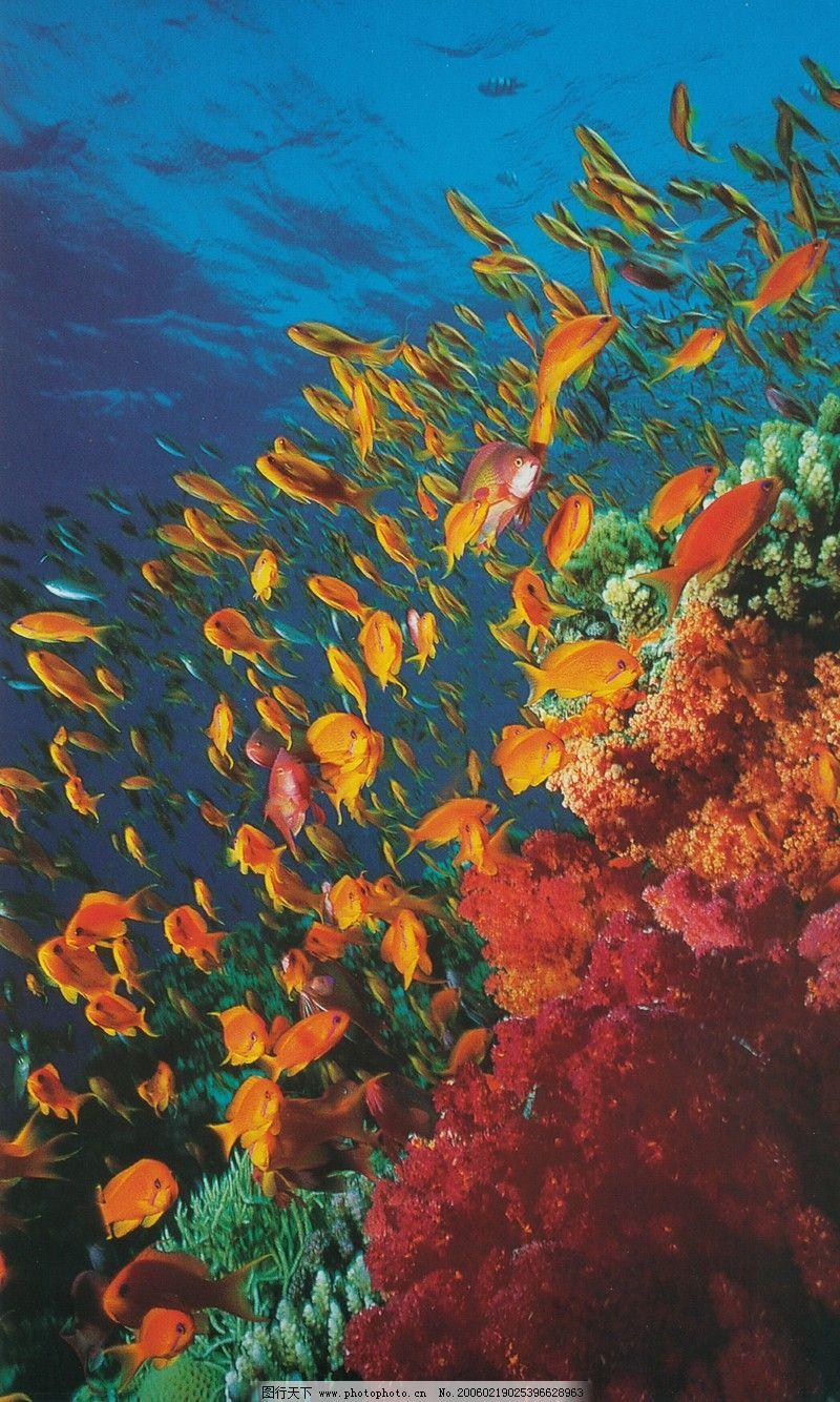 海底世界0197
