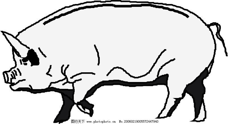 珍稀动物0726