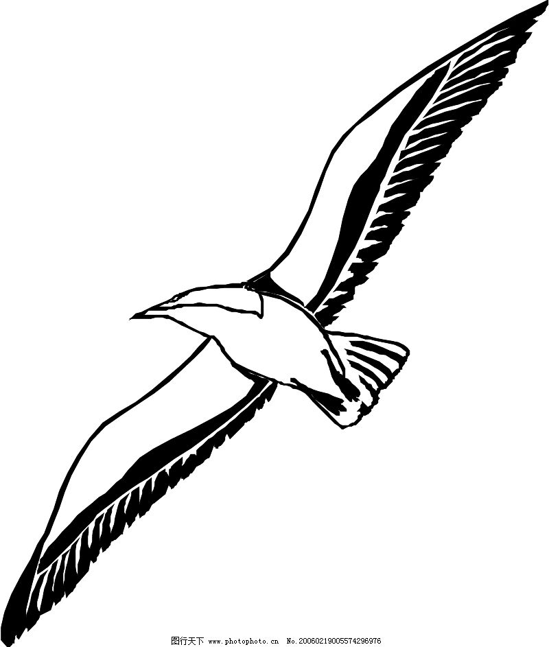 鸟的天堂0704