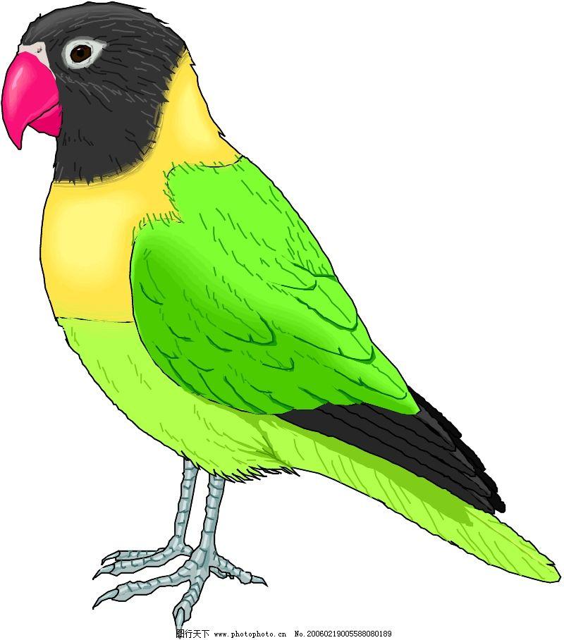 鸟的天堂0203