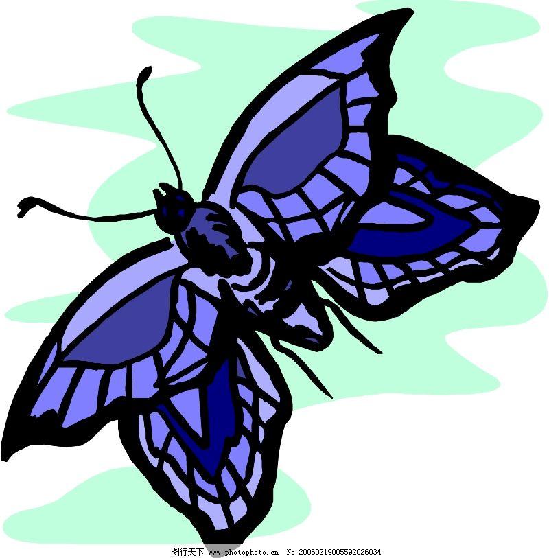 动物 昆虫蝴蝶 animals insects butterlies