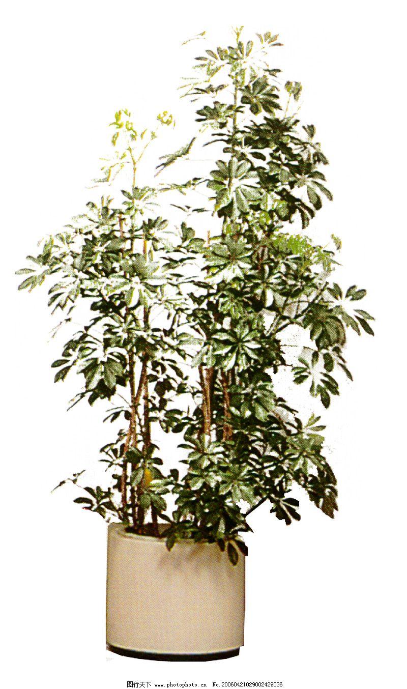 盆栽植物0222