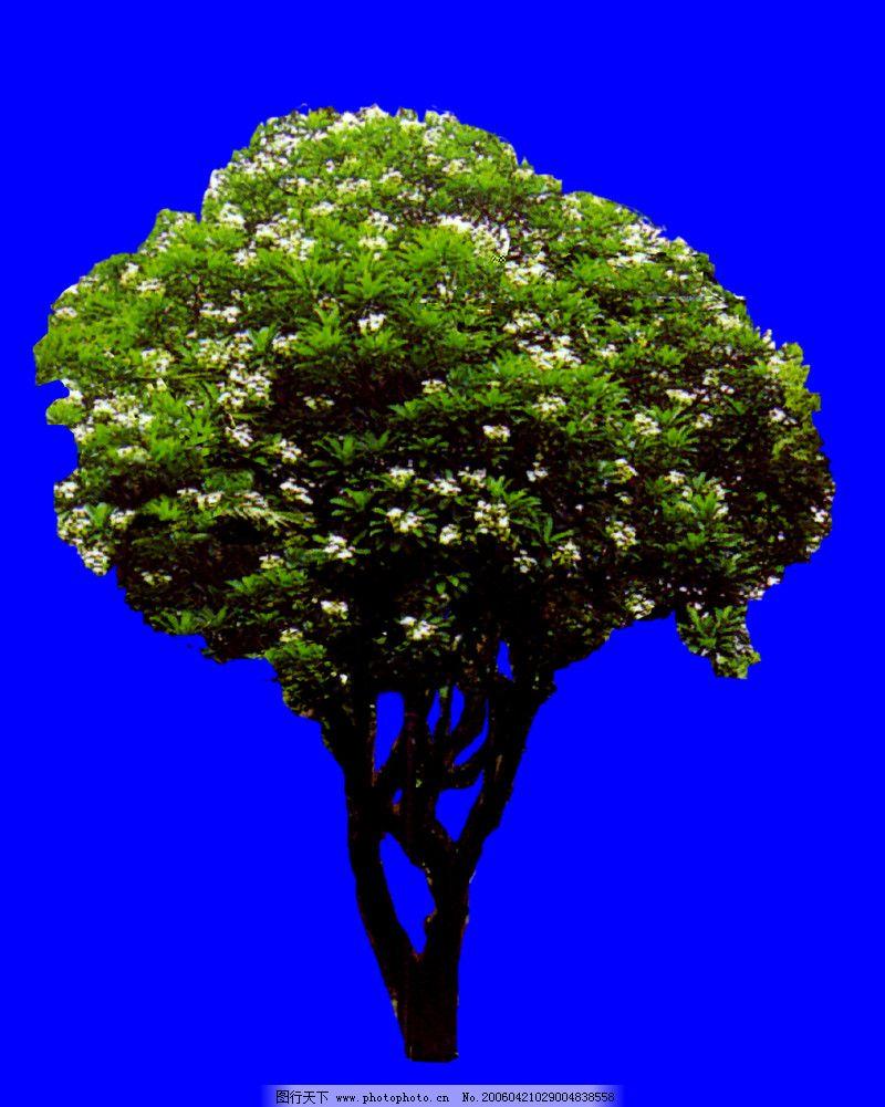 四季阔叶树0049