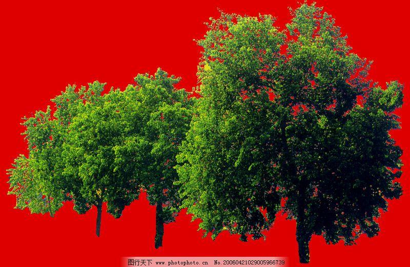 行道树0037