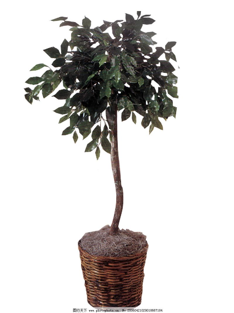 室内植物0069