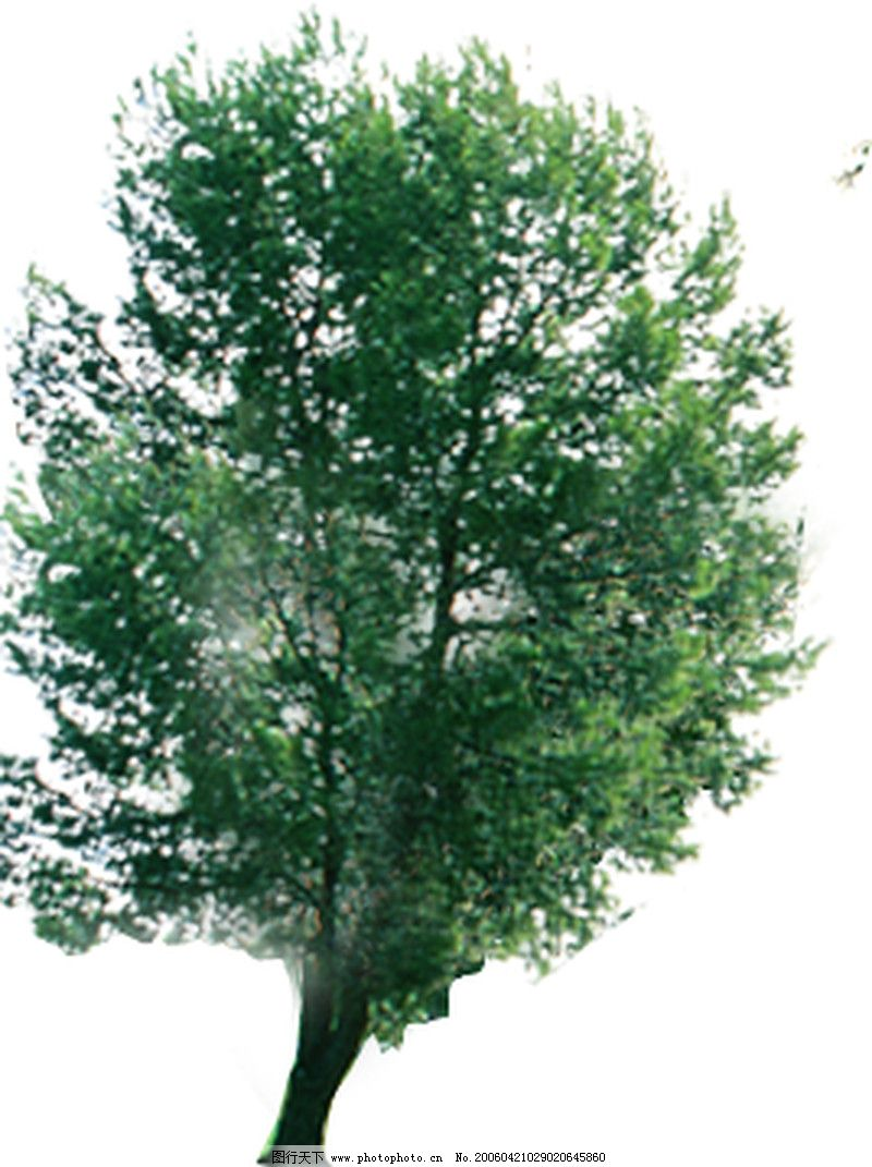 四季阔叶树0184