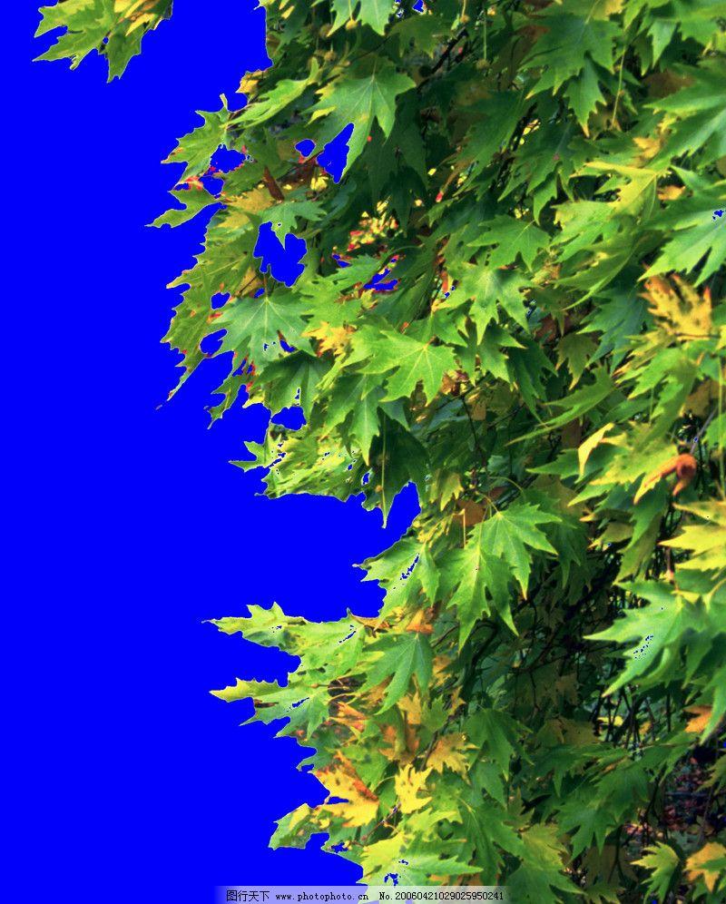 四季阔叶树0023