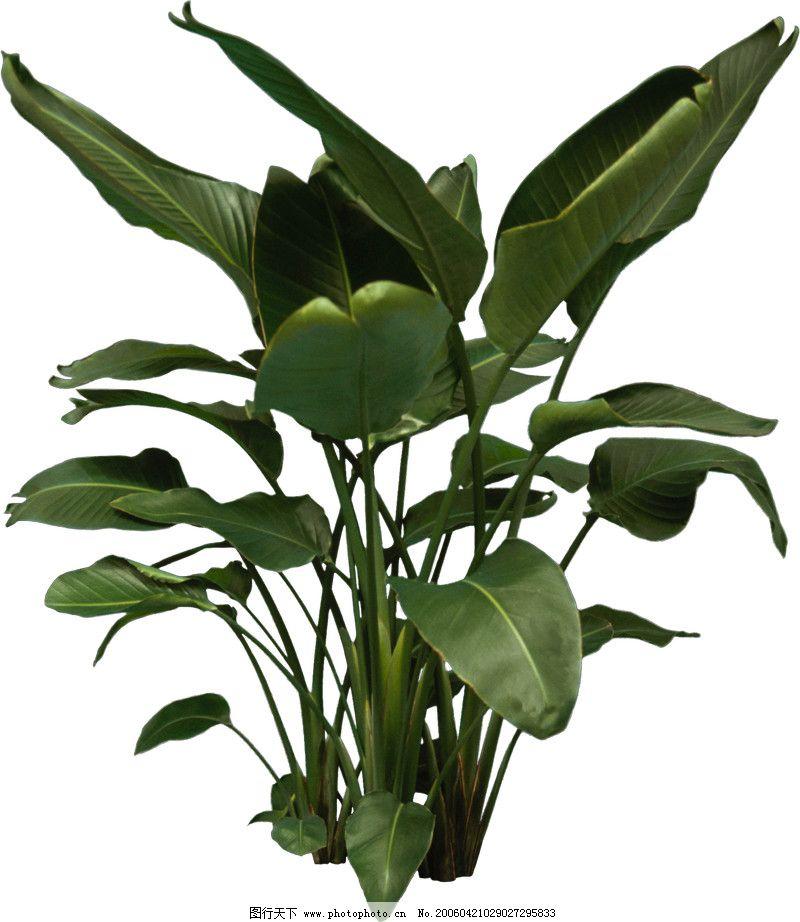 盆栽植物0097