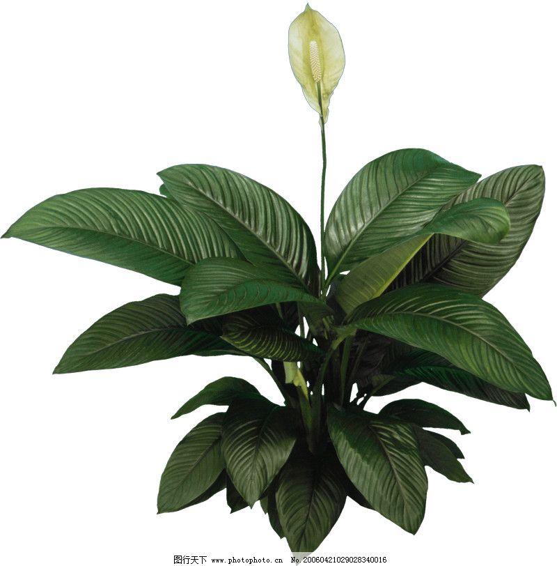 盆栽植物0094