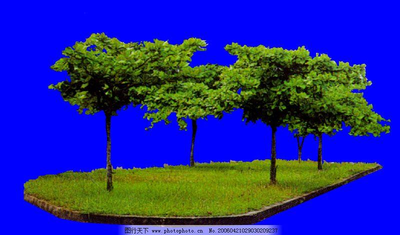 行道树0029