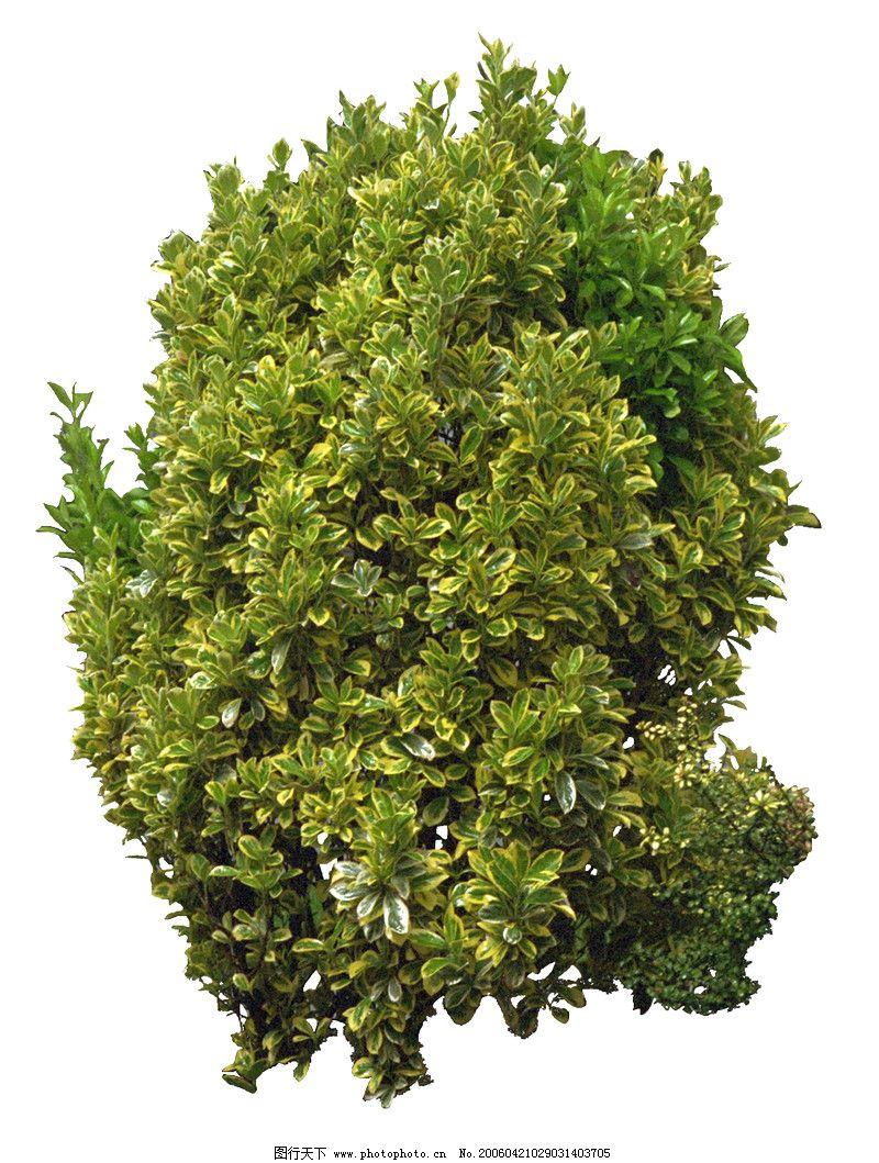 小灌木俯视图贴图素材