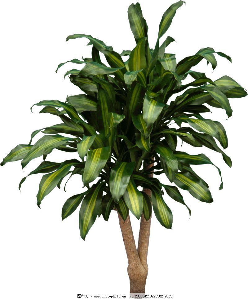 盆栽植物0045
