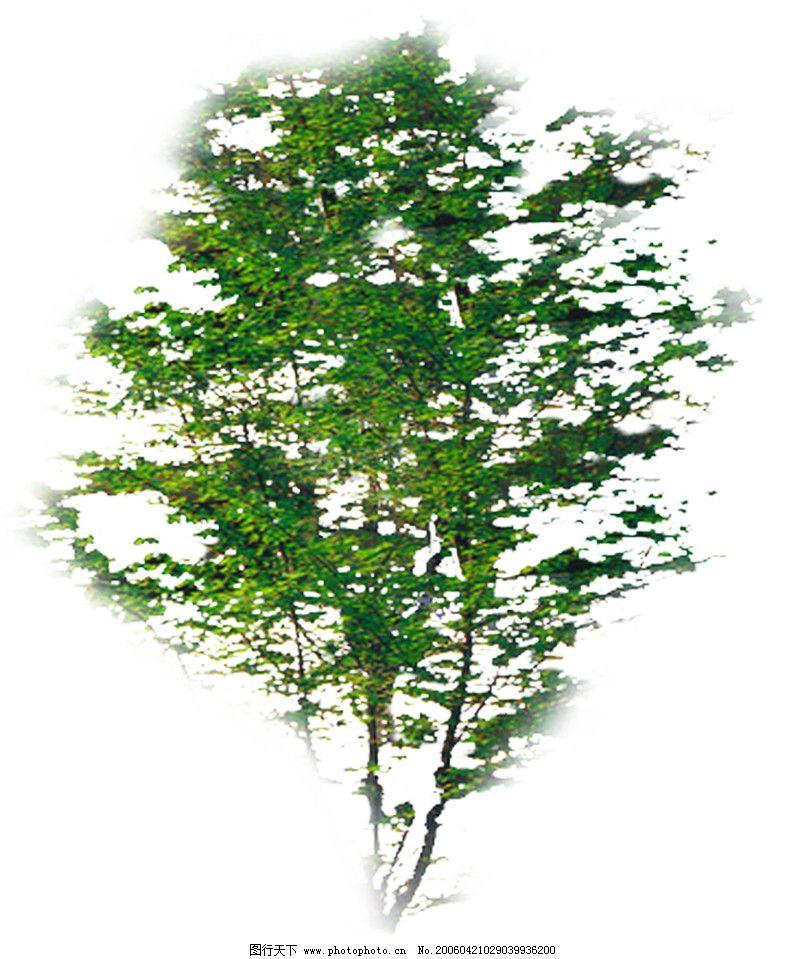 植物 四季阔叶树