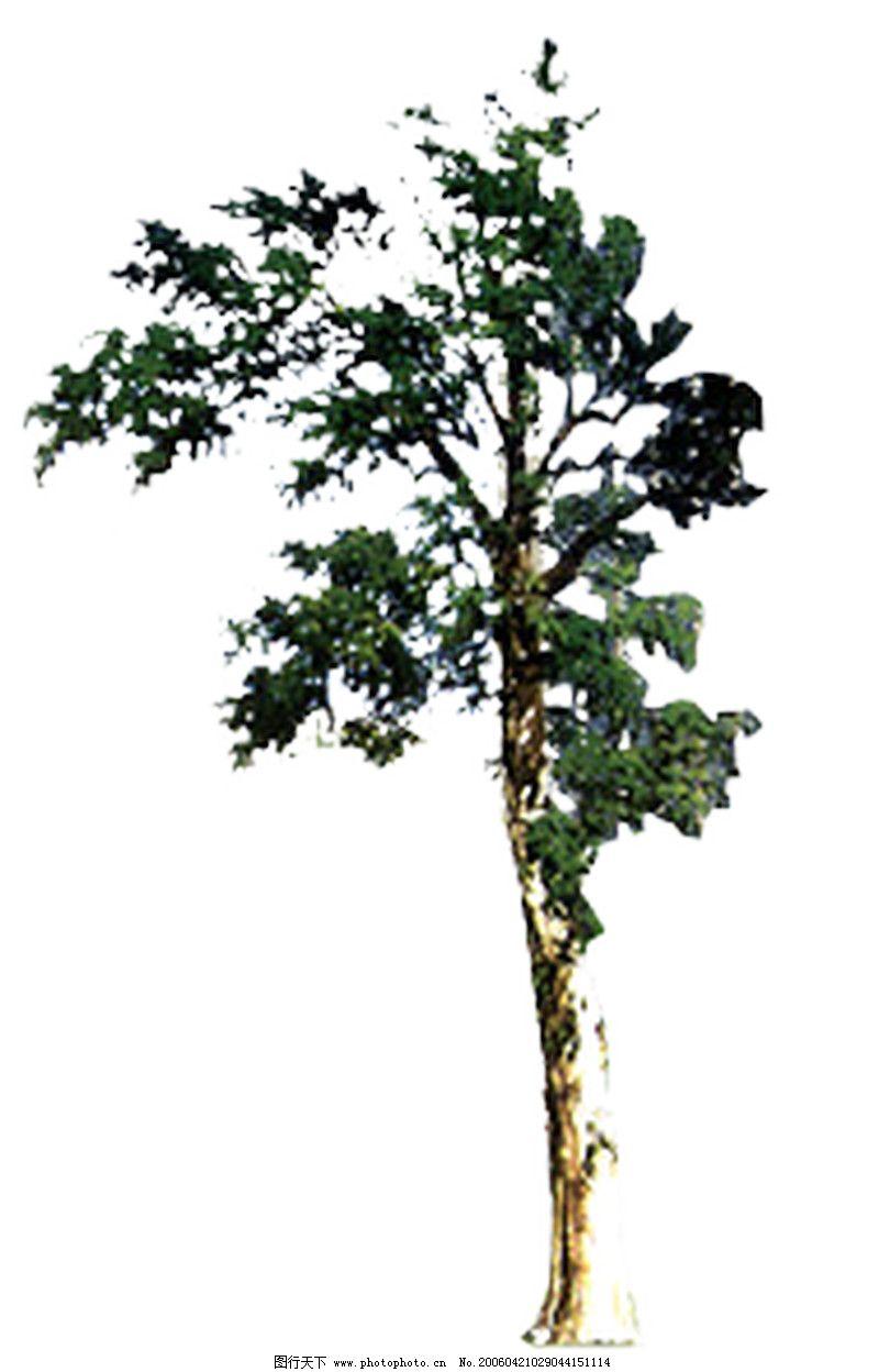 四季阔叶树0183