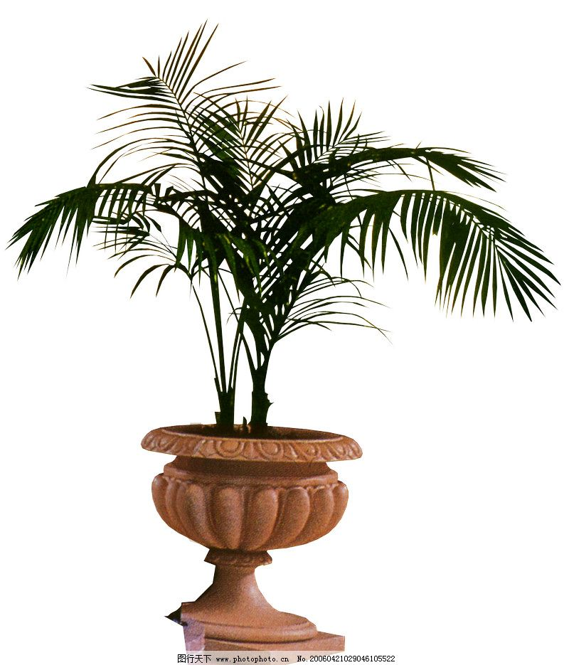 盆栽植物0229