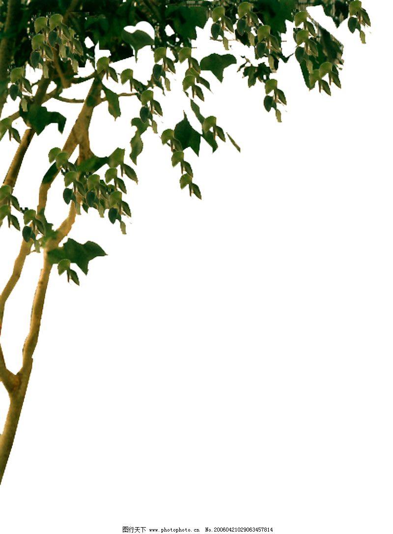 室外植物0059_其他_环境设计_图行天下图库