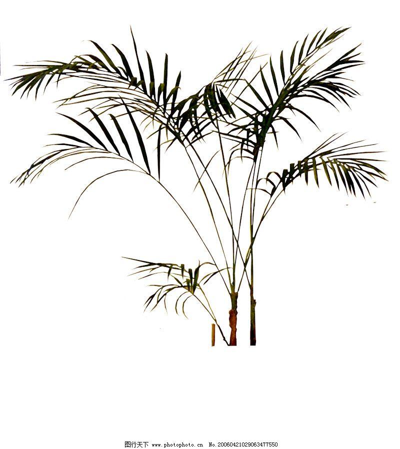 盆栽植物0226