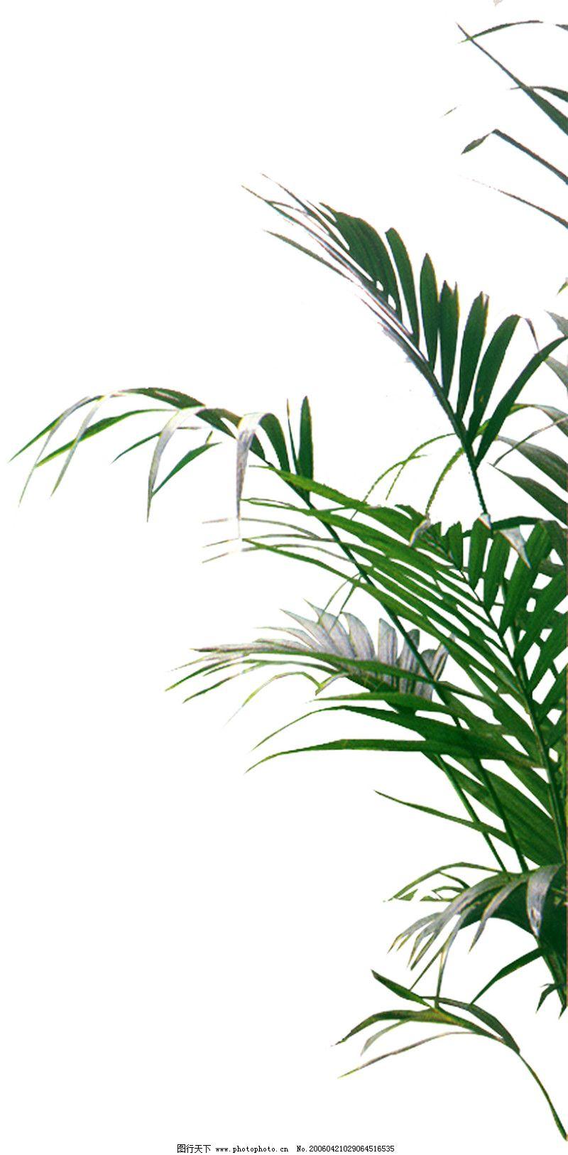 环境设计线稿植物场景