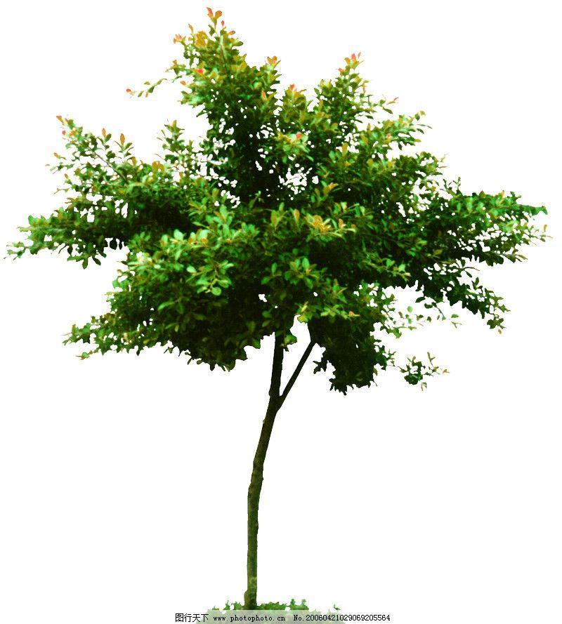 热带树群0006_其他_环境设计_图行天下图库