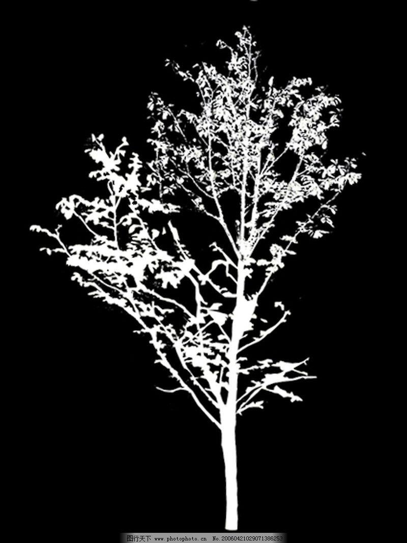 四季阔叶树0120