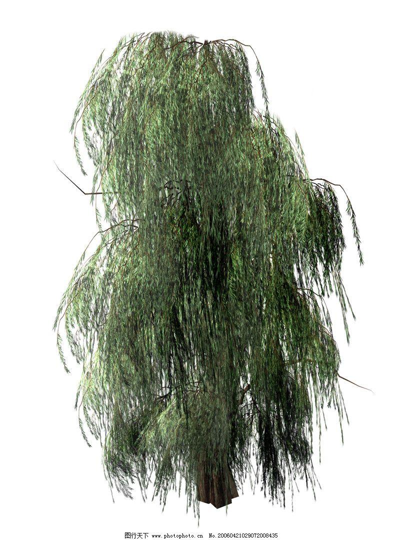 垂柳 柳树 树 800_1080 竖版 竖屏