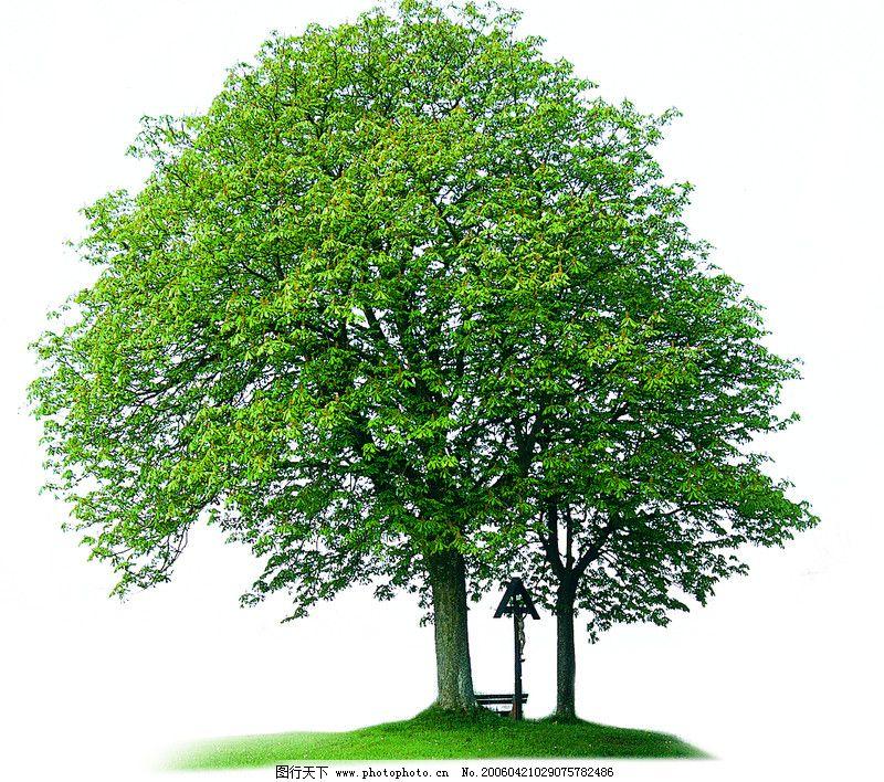 四季阔叶树0009