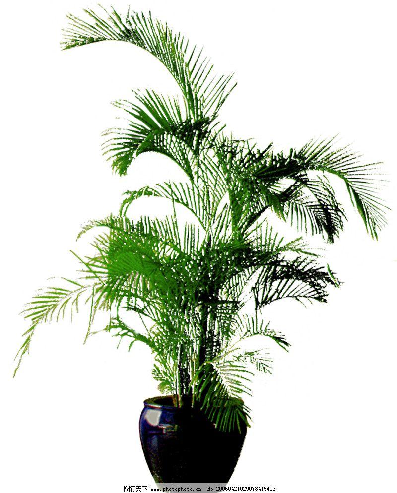 盆栽植物0232