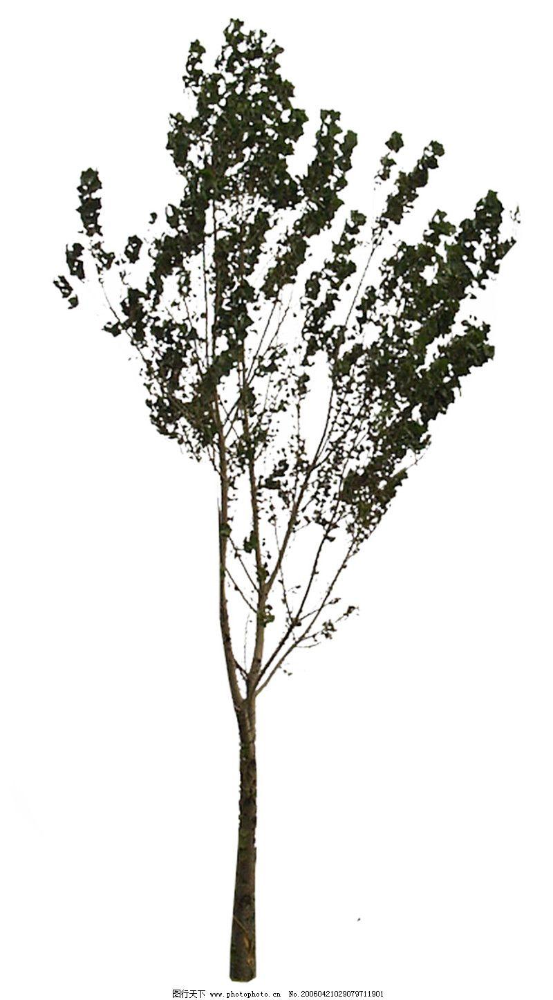 室外植物0036_其他_环境设计_图行天下图库