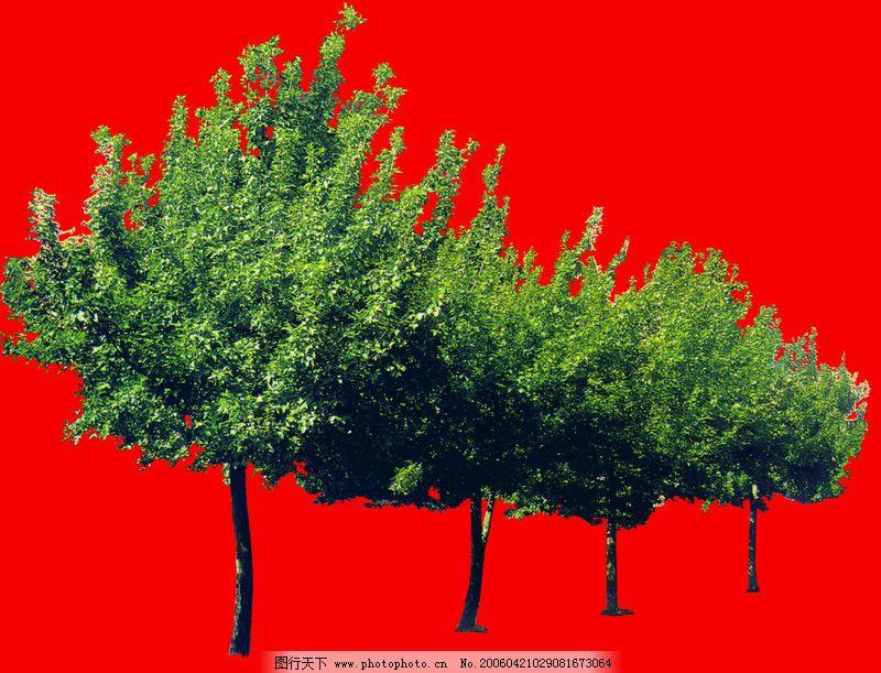 行道树0034