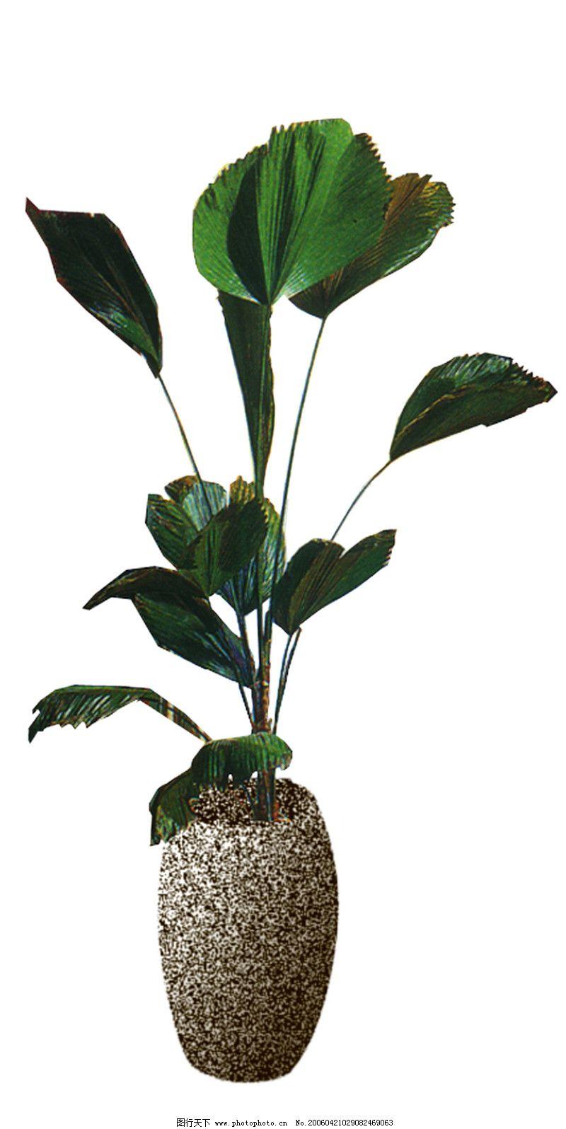 室内植物0064_其他_环境设计_图行天下图库