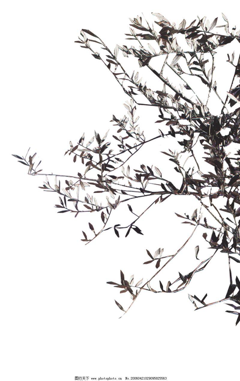 室内植物0015